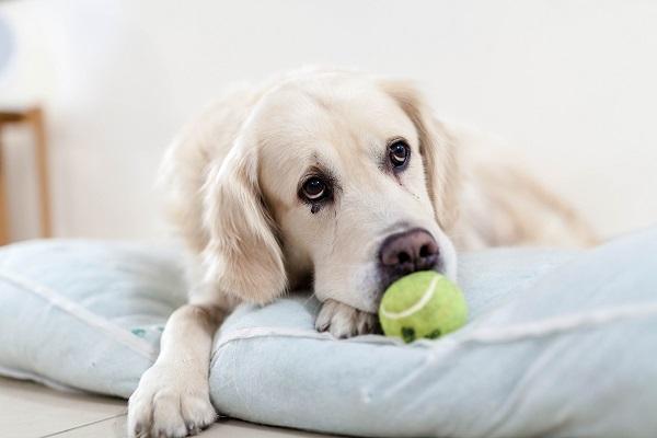 Kas galima miestuose šunų šeimininkams
